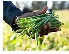 小規模生産農家(イメージ)