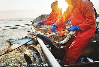 アラスカ産の天然鮭を楽しむ!