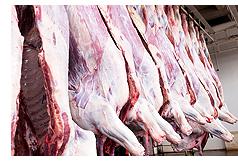 牛肉管理(イメージ)
