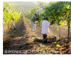 豊かな土壌と気候の下でつくられるカリフォルニアワイン (c)カリフォルニアワインインスティテュート