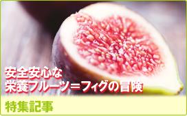 特集記事/安全安心な栄養フルーツ=フィグの冒険