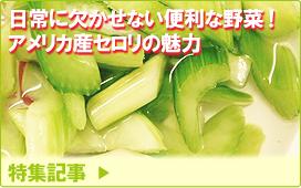 特集記事/日常に欠かせない便利な野菜!ーアメリカ産セロリの魅力