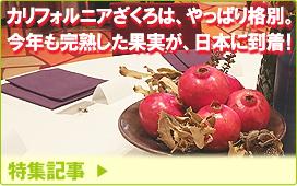 特集記事/カリフォルニアざくろは、やっぱり格別。今年も完熟した果実が、日本に到着!